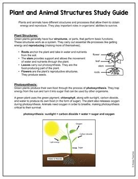 Plants Study Guide Answers