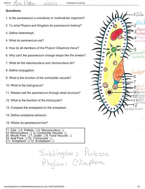 Protist Structure And Function Answer Key