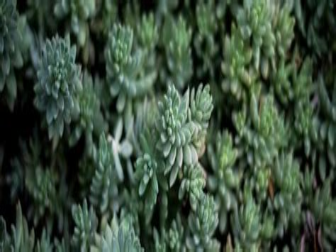 TMMI-P Dumps Download