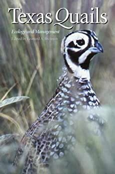 Texas Quails Ecology And Management Perspectives On South Texas Sponsored By Texas Aandm University Kingsville