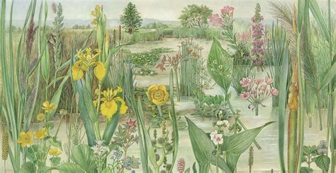 The Art of British Natural History (Images of Nature)