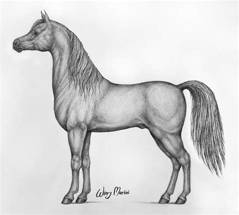 The Drawing Guide Learn To Draw Horses English Edition
