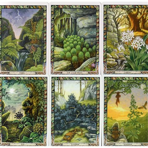 The Druid Plant Oracle: Working with the magical flora of the Druid tradition (illustrated book and deck)