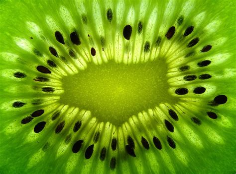 The Natural World Close-Up