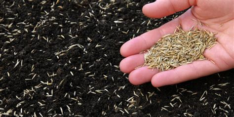 The Seeds Of Lawn Tennis