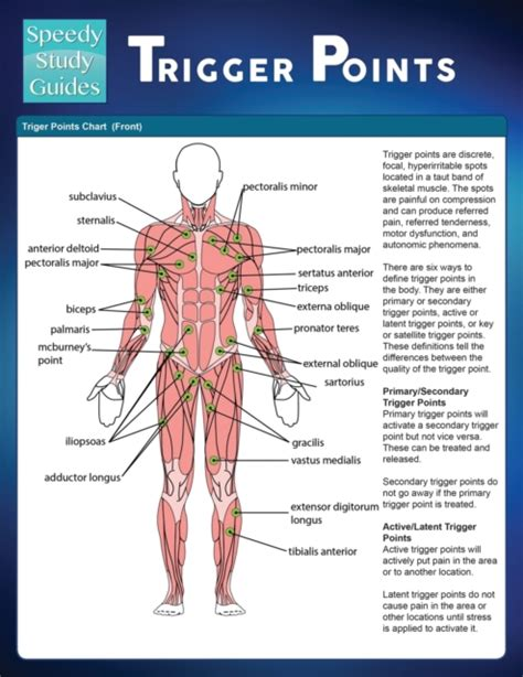 Trigger Points Speedy Study Guide
