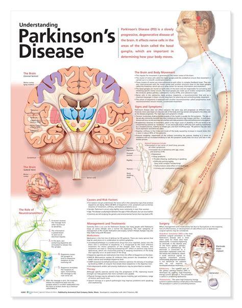 Understanding Parkinson S Disease Anatomical Chart