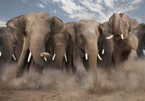 Vida animal: Fotografías de fauna en su hábitat