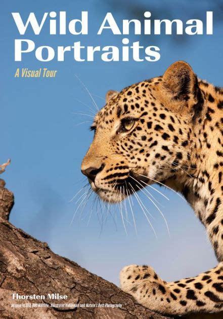 Wild Animal Portraits A Visual Tour