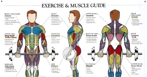 Your Muscles Blueprint Tabla