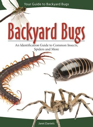backyard bugs an identification guide to common insects spiders and more