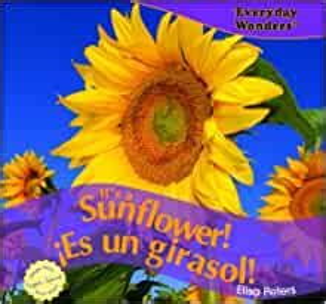 its a sunflower es un girasol everyday wonders maravillas de todos los dias