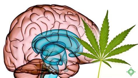 trastorno por uso de cannabis y otros trastornos mentales
